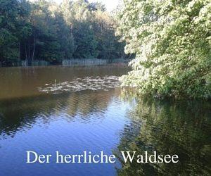 Der herrliche Waldsee